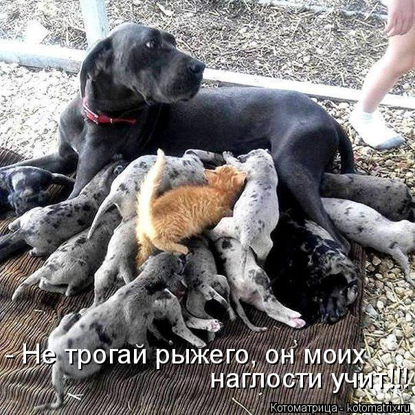 http://kotomatrix.ru/images/lolz/2015/01/09/kotomatritsa_OT.jpg