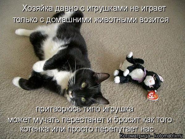 Котоматрица: Хозяйка давно с игрушками не играет только с домашними животными возится притворюсь типо игрушка может мучать перестанет и бросит как тог