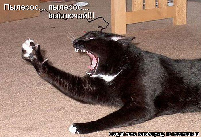 Котоматрица: Пылесос... пылесос... выключай!!!