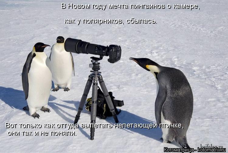 Котоматрица: В Новом году мечта пингвинов о камере,  как у полярников, сбылась.  Вот только как оттуда вылетать нелетающей птичке,  они так и не поняли.