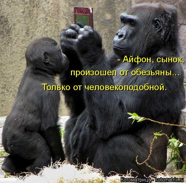 Котоматрица: - Айфон, сынок,   произошел от обезьяны... Только от человекоподобной.