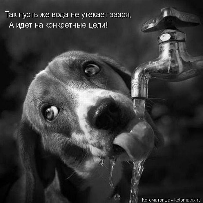 Котоматрица: Так пусть же вода не утекает зазря,  А идет на конкретные цели!