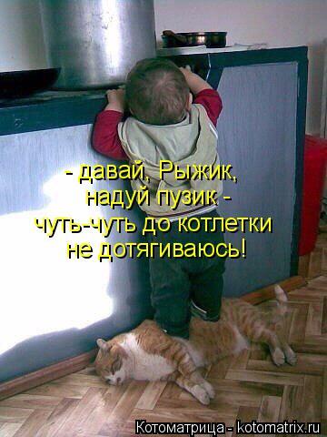 Котоматрица: - давай, Рыжик,  надуй пузик - чуть-чуть до котлетки не дотягиваюсь!