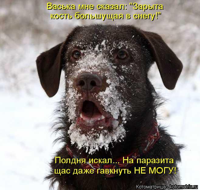 """Котоматрица: Васька мне сказал: """"Зарыта кость большущая в снегу!"""" Полдня искал... На паразита щас даже гавкнуть НЕ МОГУ!"""