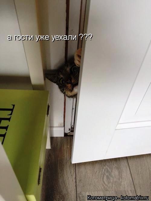 Котоматрица: а гости уже уехали ???