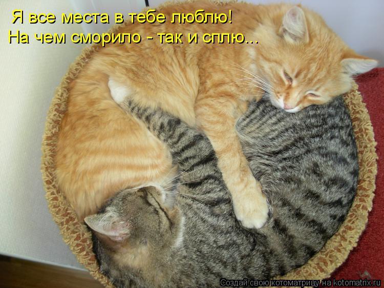 Котоматрица: Я все места в тебе люблю! На чем сморило - так и сплю...