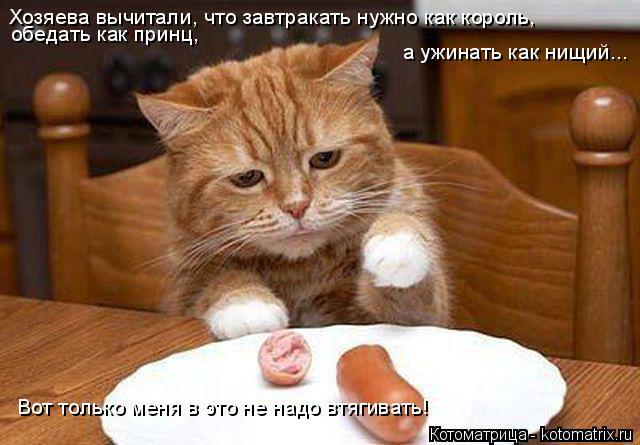 Котоматрица: Хозяева вычитали, что завтракать нужно как король,  обедать как принц,  а ужинать как нищий... Вот только меня в это не надо втягивать!