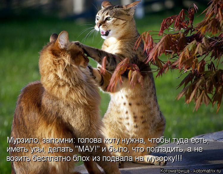 """Котоматрица: Мурзило, запомни: голова коту нужна, чтобы туда есть, иметь усы, делать """"МАУ!"""" и было, что погладить, а не возить бесплатно блох из подвала на м"""
