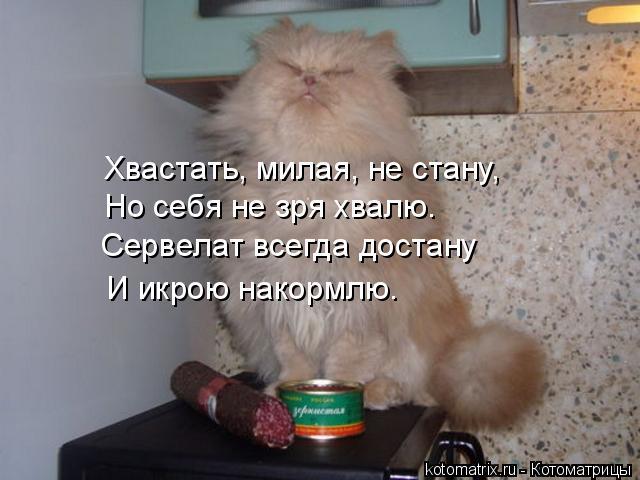 Котоматрица: Хвастать, милая, не стану, Но себя не зря хвалю. Сервелат всегда достану И икрою накормлю.