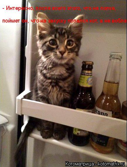 Котоматрица: - Интересно, после всего этого, что на полке, поймет он, что на закуску попался кот, а не вобла?