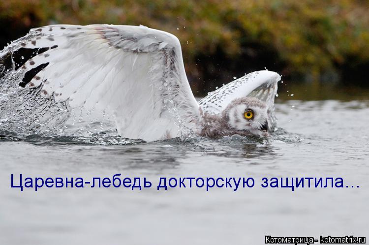 Котоматрица: Царевна-лебедь докторскую защитила…