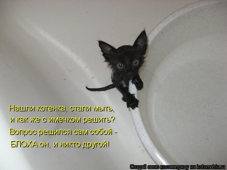 Котоматрица: Нашли котенка, стали мыть, и как же с имечком решить? Вопрос решился сам собой -  БЛОХА он, и никто другой!
