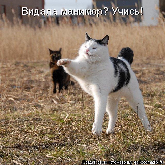 Котоматрица: Видала маникюр? Учись!
