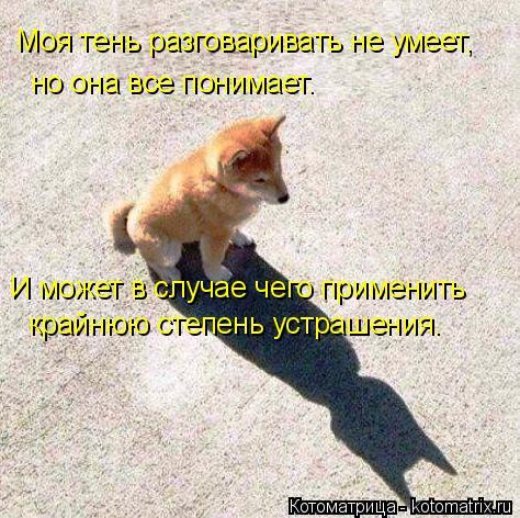 Котоматрица: Моя тень разговаривать не умеет,  но она все понимает. И может в случае чего применить крайнюю степень устрашения.