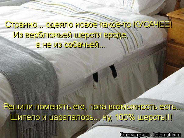 Котоматрица: Странно... одеяло новое какое-то КУСАЧЕЕ! Из верблюжьей шерсти вроде,  а не из собачьей... Шипело и царапалось... ну, 100% шерсть!!! Решили поменять