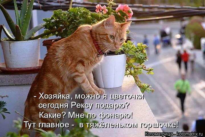Котоматрица: - Хозяйка, можно я цветочки сегодня Рексу подарю?  Какие? Мне по фонарю!  Тут главное -  в тяжёленьком горшочке!
