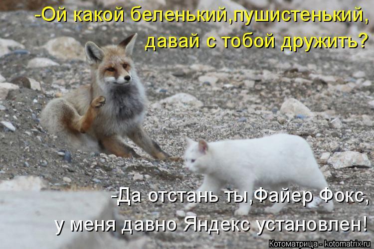 Котоматрица: -Ой какой беленький,пушистенький, давай с тобой дружить? -Да отстань ты,Файер Фокс, у меня давно Яндекс установлен!