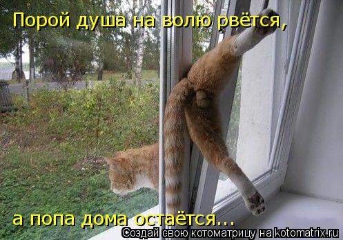 Котоматрица: Порой душа на волю рвётся, а попа дома остаётся...