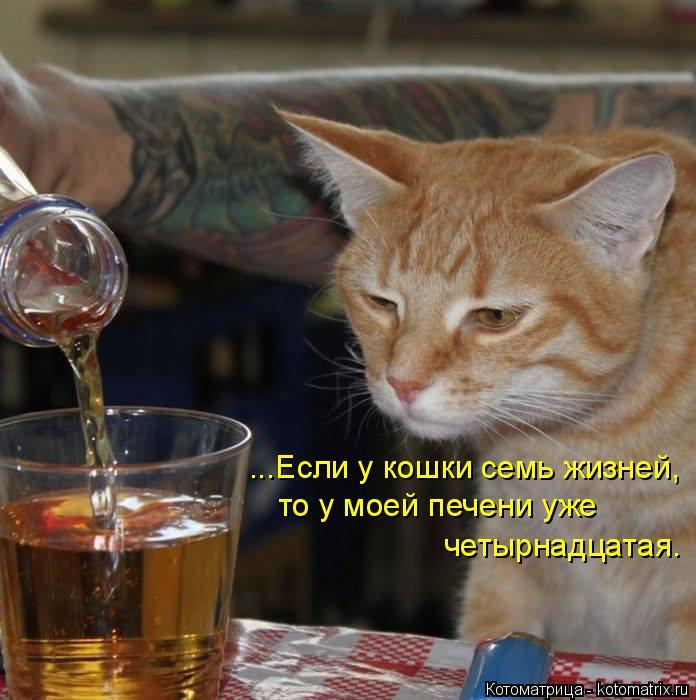 Котоматрица: ...Если у кошки семь жизней, то у моей печени уже четырнадцатая.