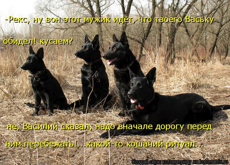 Котоматрица: -не, Василий сказал, надо вначале дорогу перед ним перебежать!...какой-то кошачий ритуал... обидел! кусаем? -Рекс, ну вон этот мужик идёт, что тв