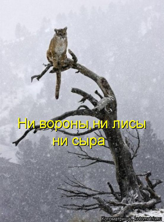 Котоматрица: Ни вороны,ни лисы ни сыра