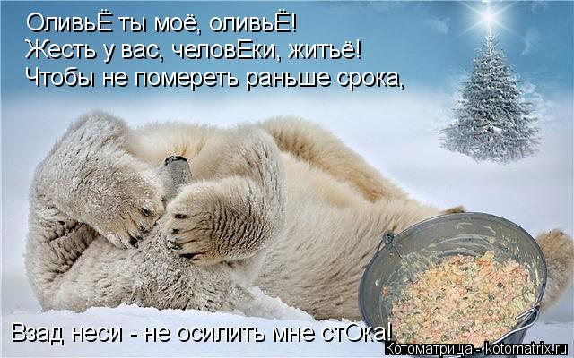 Котоматрица: ОливьЁ ты моё, оливьЁ! Жесть у вас, человЕки, житьё! Чтобы не помереть раньше срока, Взад неси - не осилить мне стОка!