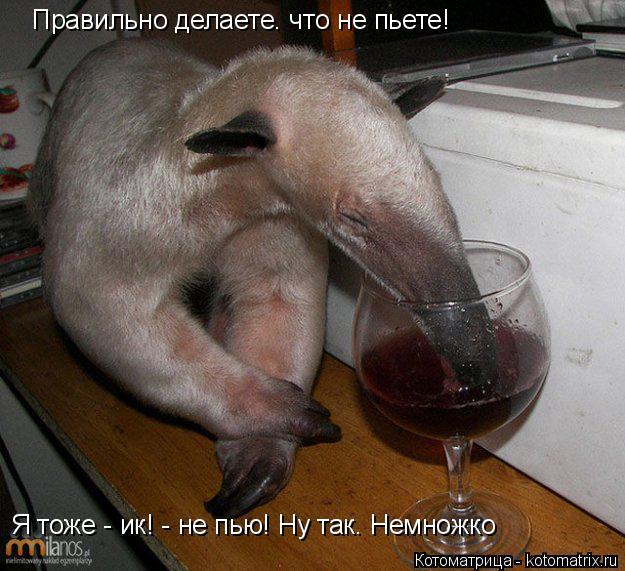 Котоматрица: Правильно делаете. что не пьете!  Я тоже - ик! - не пью! Ну так. Немножко