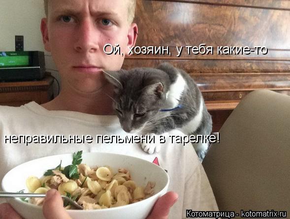 Котоматрица: Ой, хозяин, у тебя какие-то  неправильные пельмени в тарелке!