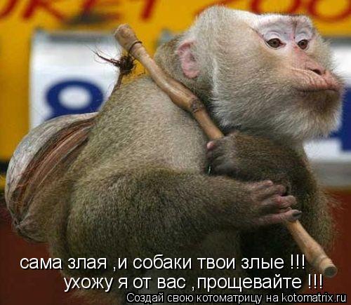 Котоматрица: сама злая ,и собаки твои злые !!! ухожу я от вас ,прощевайте !!!