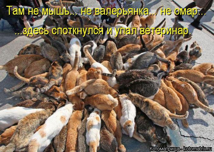 Котоматрица: Там не мышь... не валерьянка... не омар... ...здесь споткнулся и упал ветеринар.