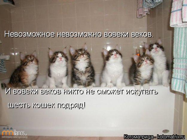 Котоматрица: Невозможное невозможно вовеки веков.  И вовеки веков никто не сможет искупать  шесть кошек подряд!