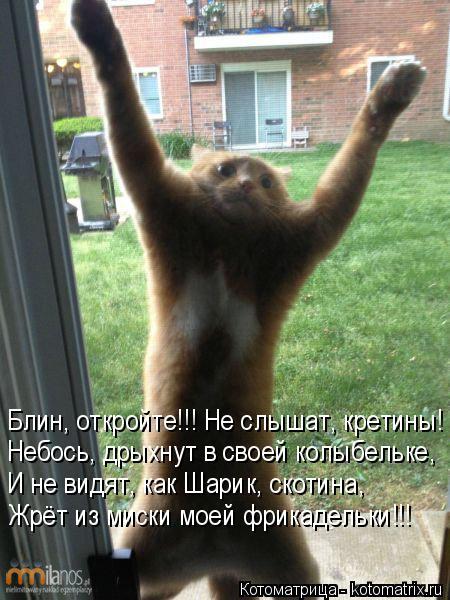 Котоматрица: Блин, откройте!!! Не слышат, кретины! Небось, дрыхнут в своей колыбельке, И не видят, как Шарик, скотина, Жрёт из миски моей фрикадельки!!!