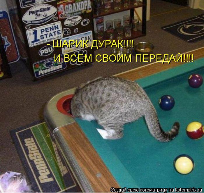 Котоматрица: И ВСЕМ СВОИМ ПЕРЕДАЙ!!!! - ШАРИК ДУРАК!!!!