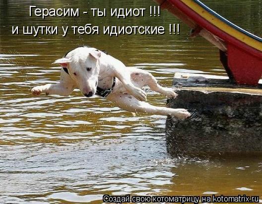 Котоматрица: Герасим - ты идиот !!! и шутки у тебя идиотские !!!