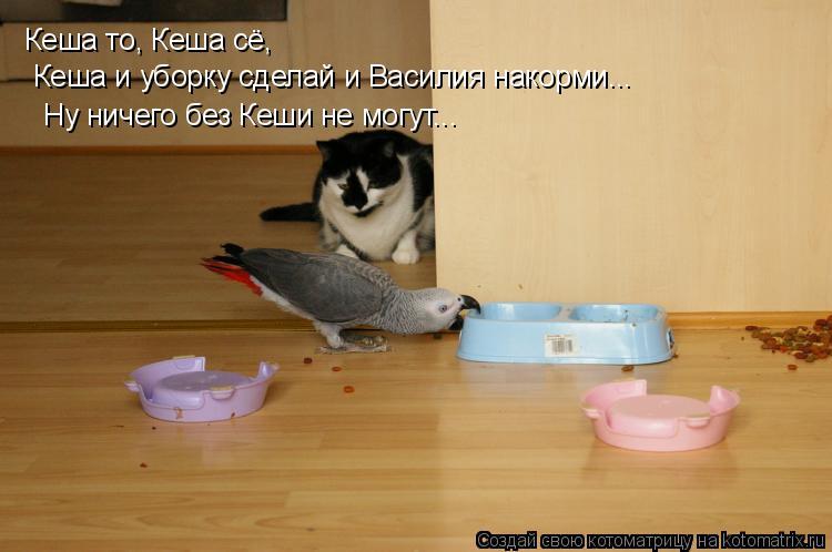 Котоматрица: Кеша то, Кеша сё,  Кеша и уборку сделай и Василия накорми... Ну ничего без Кеши не могут...