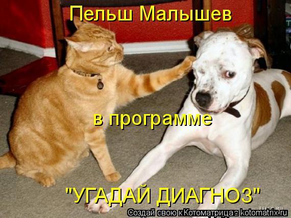 """Котоматрица: Пельш Малышев в программе """"УГАДАЙ ДИАГНОЗ"""""""