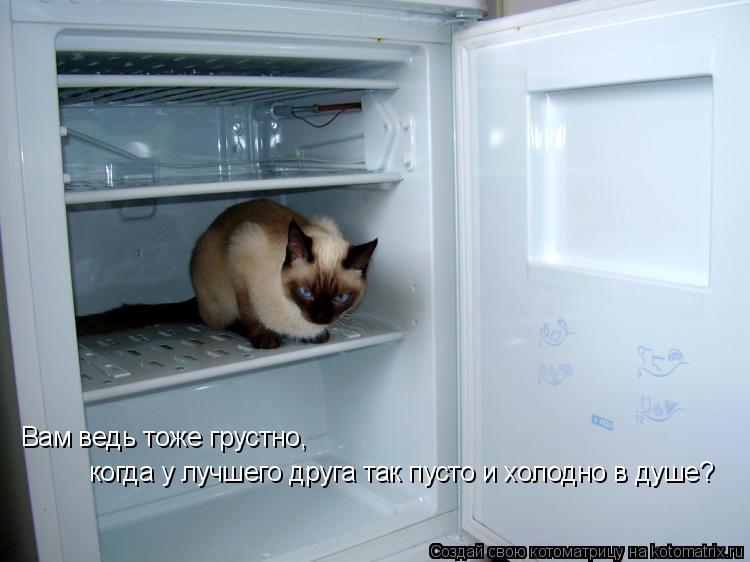 Котоматрица: Вам ведь тоже грустно,  когда у лучшего друга так пусто и холодно в душе?