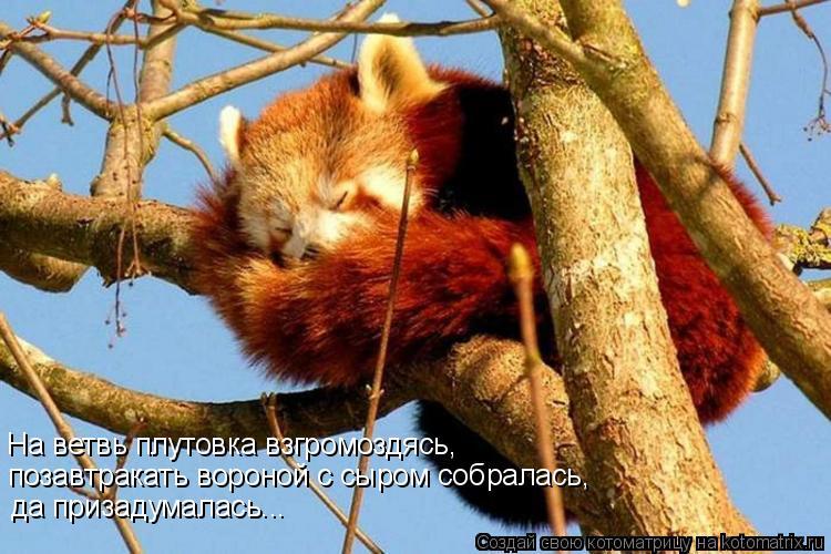 Котоматрица: На ветвь плутовка взгромоздясь, позавтракать вороной с сыром собралась, да призадумалась...