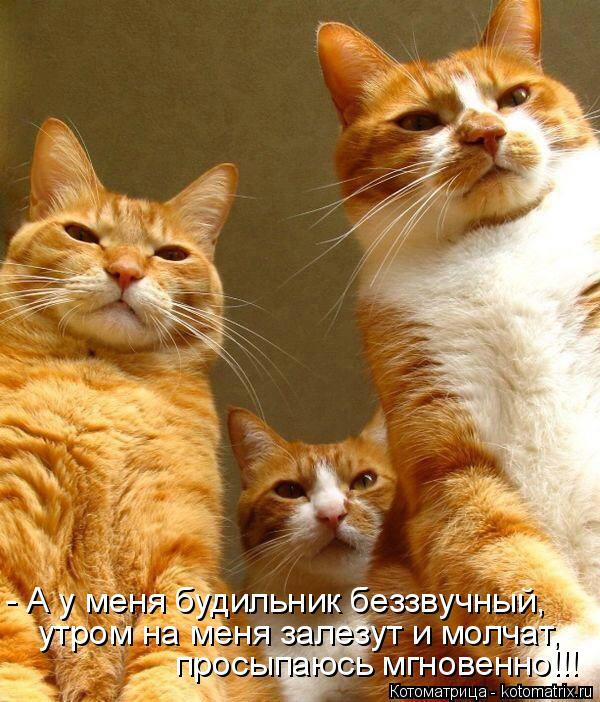 Котоматрица: - А у меня будильник беззвучный, утром на меня залезут и молчат, просыпаюсь мгновенно!!!