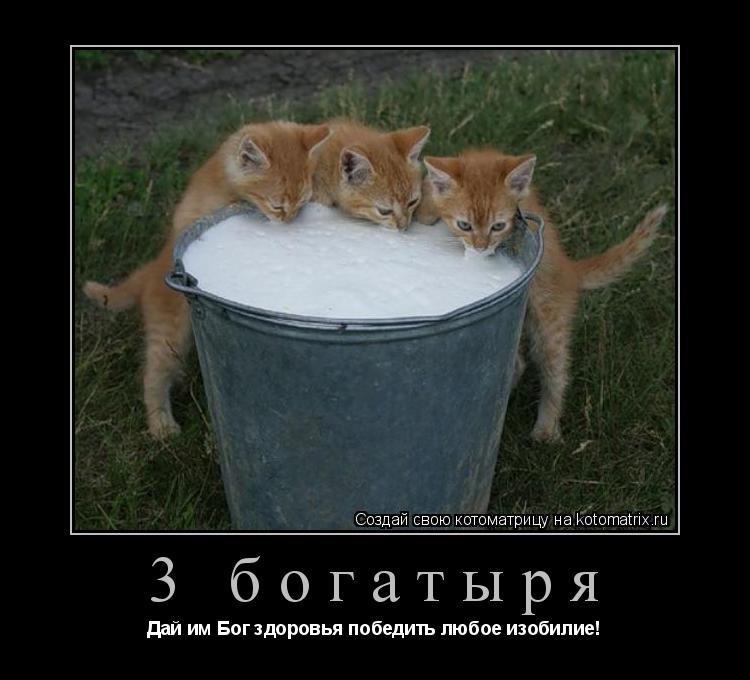 Котоматрица: 3 богатыря Дай им Бог здоровья победить любое изобилие!
