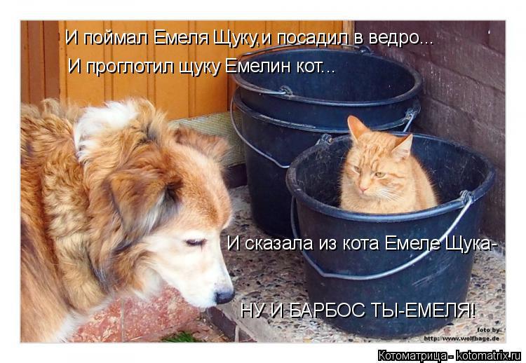 Котоматрица: И поймал Емеля Щуку,и посадил в ведро... И проглотил щуку Емелин кот...  И сказала из кота Емеле Щука-  НУ И БАРБОС ТЫ-ЕМЕЛЯ!
