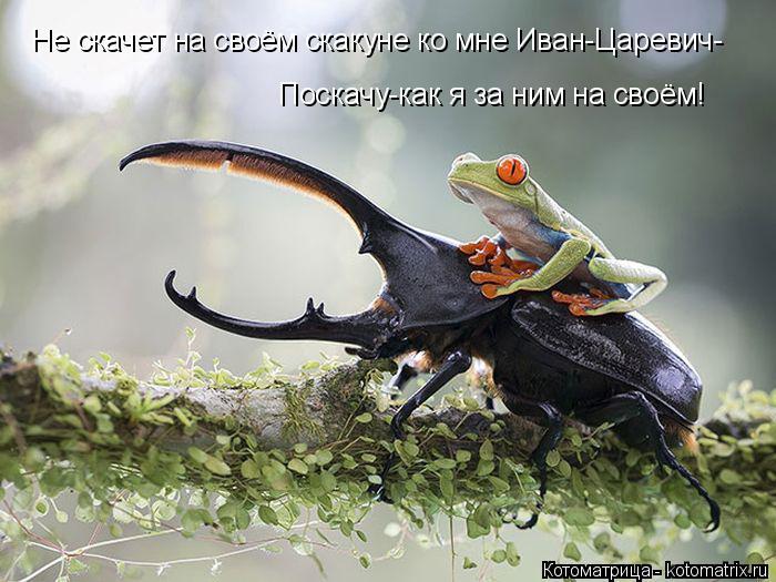 Котоматрица: Не скачет на своём скакуне ко мне Иван-Царевич- Поскачу-как я за ним на своём!