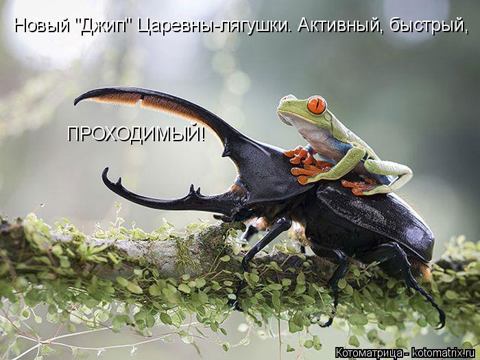 """Котоматрица: Новый """"Джип"""" Царевны-лягушки. Активный, быстрый,  ПРОХОДИМЫЙ!"""