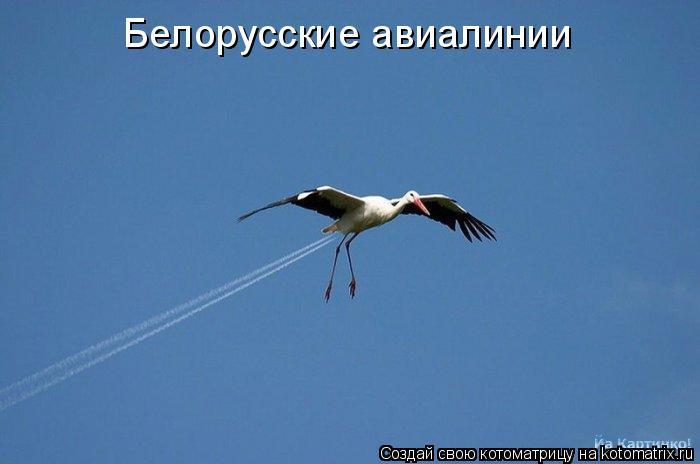 Котоматрица: Белорусские авиалинии
