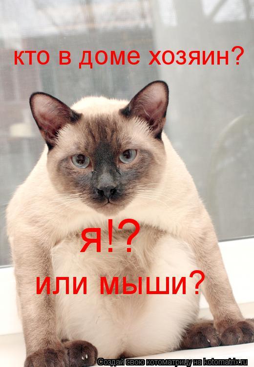 Котоматрица: кто в доме хозяин? я!? или мыши?
