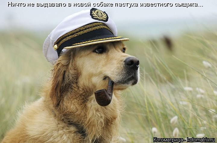 Котоматрица: Ничто не выдавало в новой собаке пастуха известного сыщика...