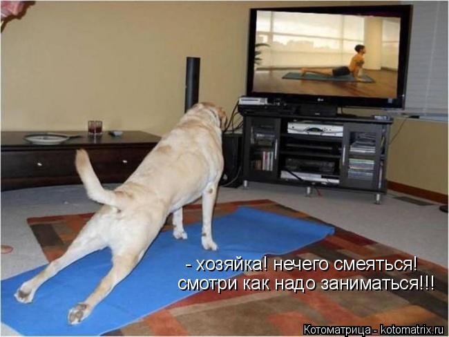 Котоматрица: - хозяйка! нечего смеяться! смотри как надо заниматься!!!