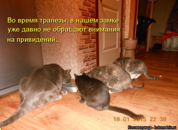 Котоматрица: Во время трапезы, в нашем замке уже давно не обращают внимания на привидений...