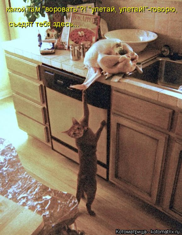 """Котоматрица: какой там """"воровать""""?! """"улетай, улетай!""""-говорю, съедят тебя здесь..."""