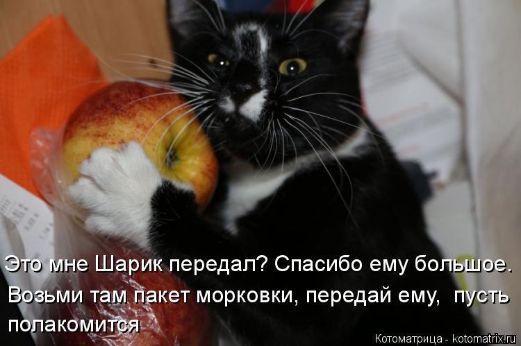 Котоматрица: Это мне Шарик передал? Спасибо ему большое. Возьми там пакет морковки, передай ему,  пусть полакомится